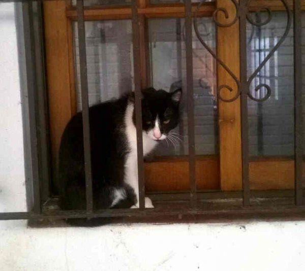 Tus mascotas: Mascarita perdió a su mamá humana y espera que la adopten