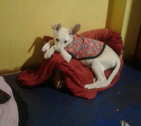 Tus mascotas: Pitufina busca quien la adopte