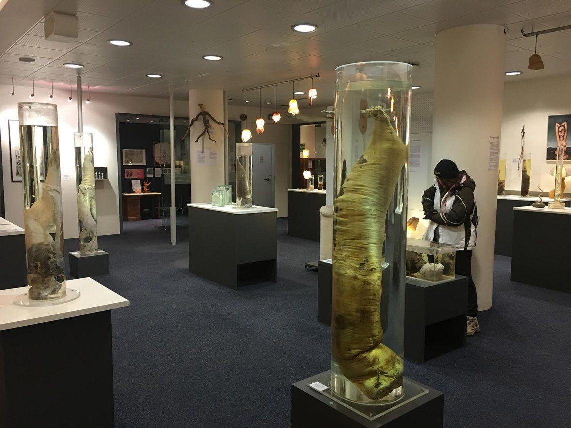 Conocé La Faloteca islandesa, el museo del pene que es furor para los turistas