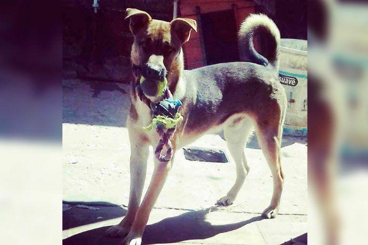 Alfonso, un perrito especial