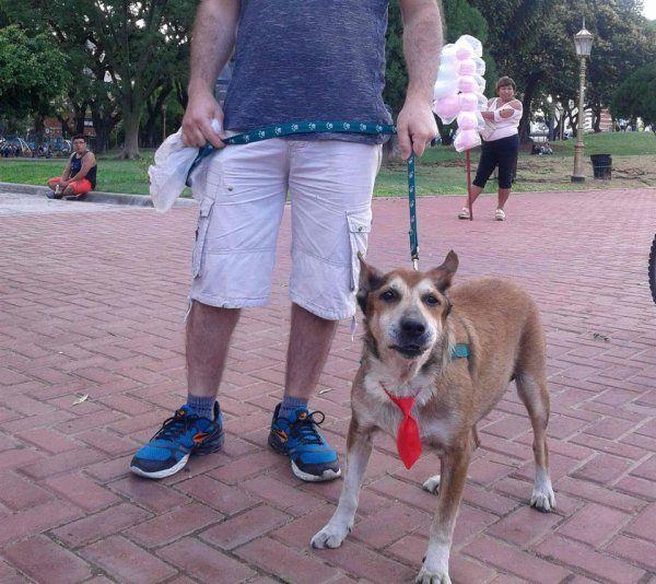 Tus mascotas: Gabito sigue con sus paseos