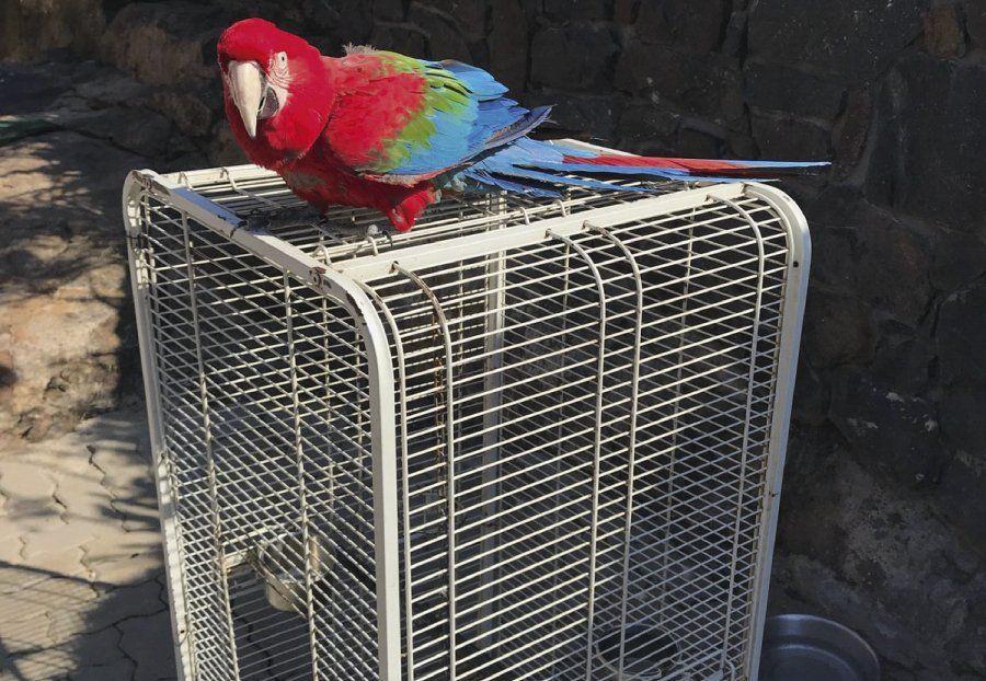 Qué animales exóticos tenía Balcedo en su casa