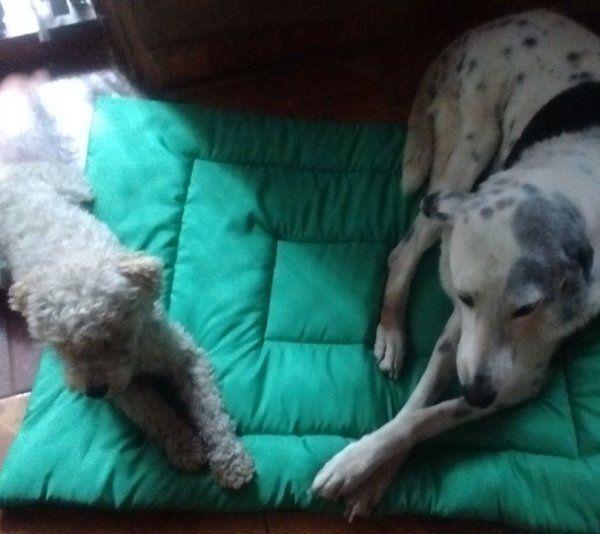 Tus mascotas: Toti y Cami, con colchoneta nueva