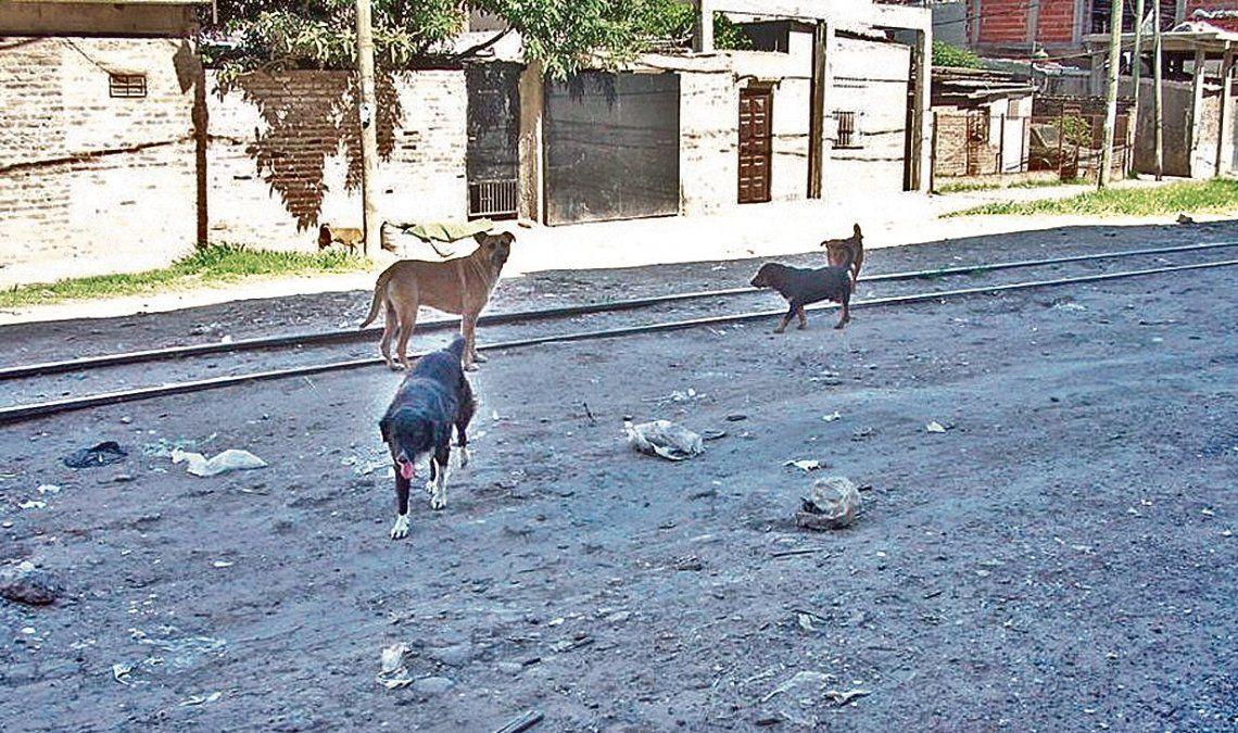 """d""""Hay muchos animales en situación de calle y algunos de ellos terminan atropellados. Eso es lo que no queremos"""""""