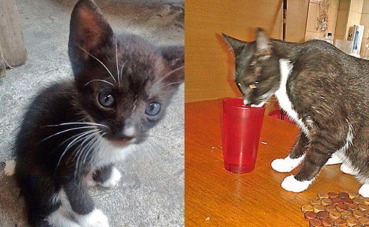 El pequeño gatito Tomás