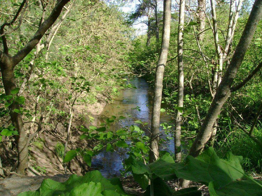 Laguna de Rocha está más en peligro que antes
