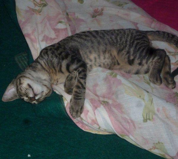 El sueño de Tigre