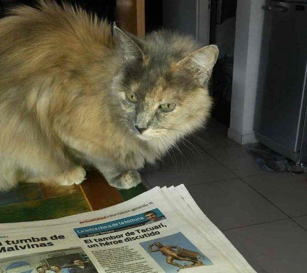 Tus mascotas: Una gatita con varios nombres