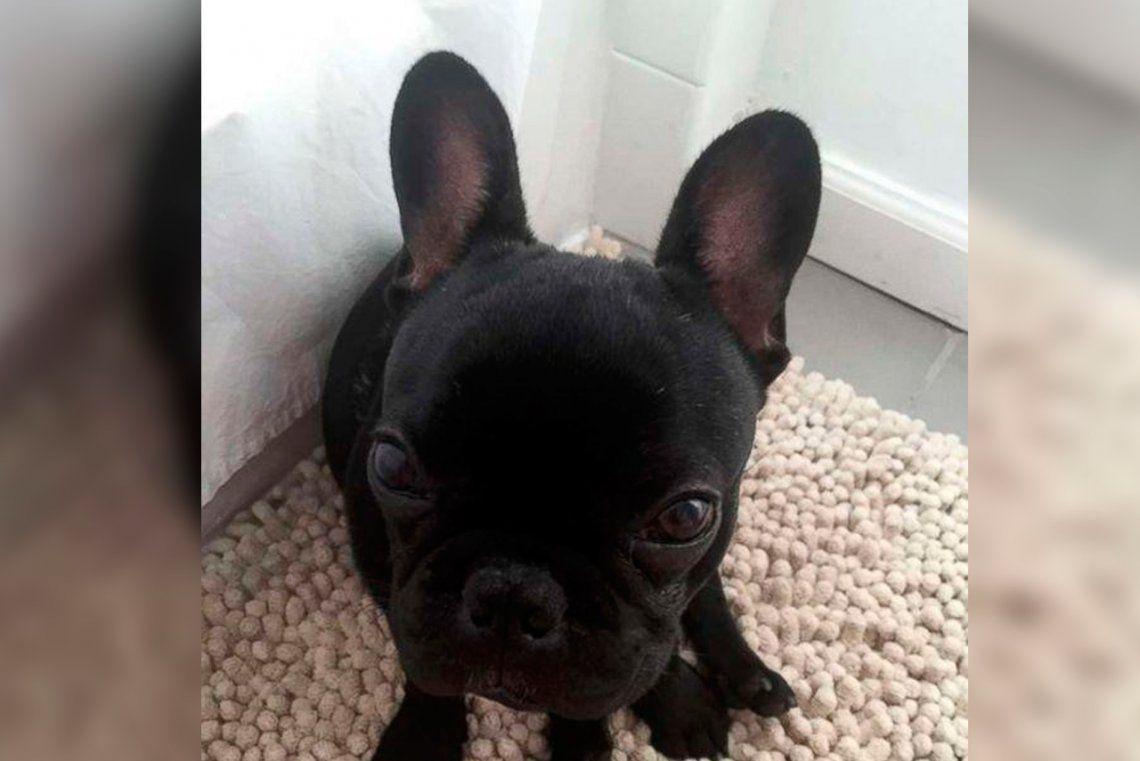 Kokito, el  perro que murió en el portaequipaje de un avión