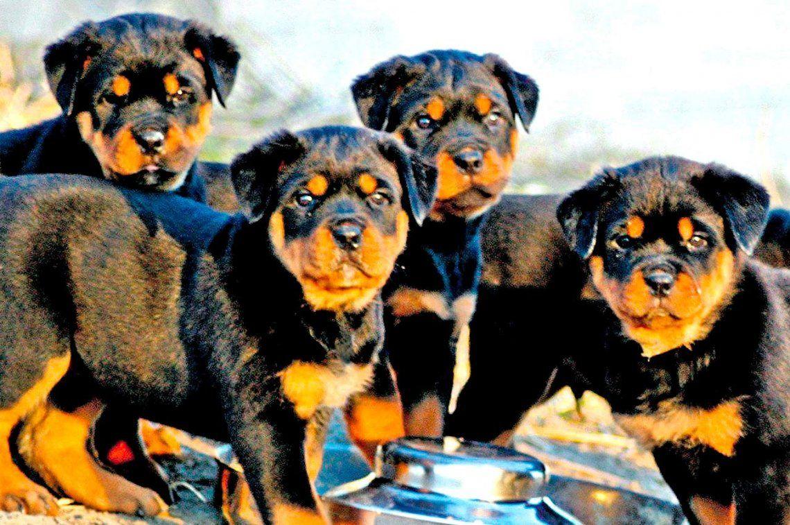 Cachorros bien nutridos y saludables