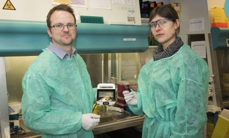 Un nuevo método simplifica el diagnóstico de la hepatitis C