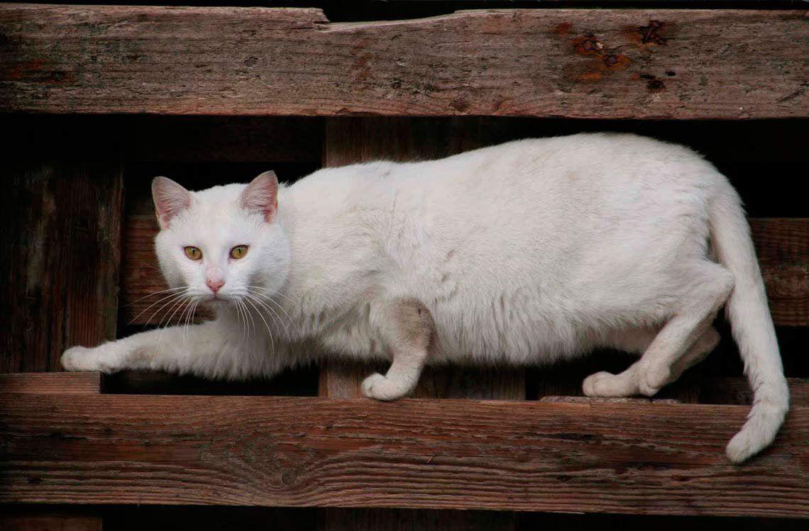 Gatos: vulnerables a los escenarios desconocidos