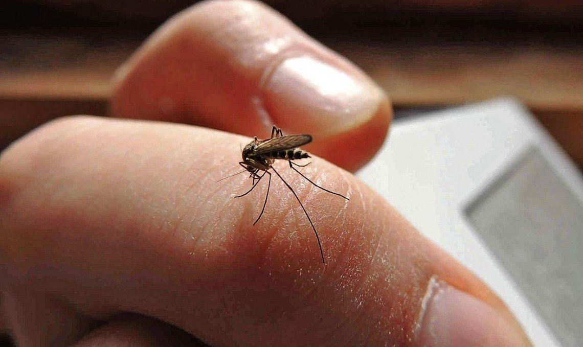 dAdvierten que la infección por el mosquito se mantiene.