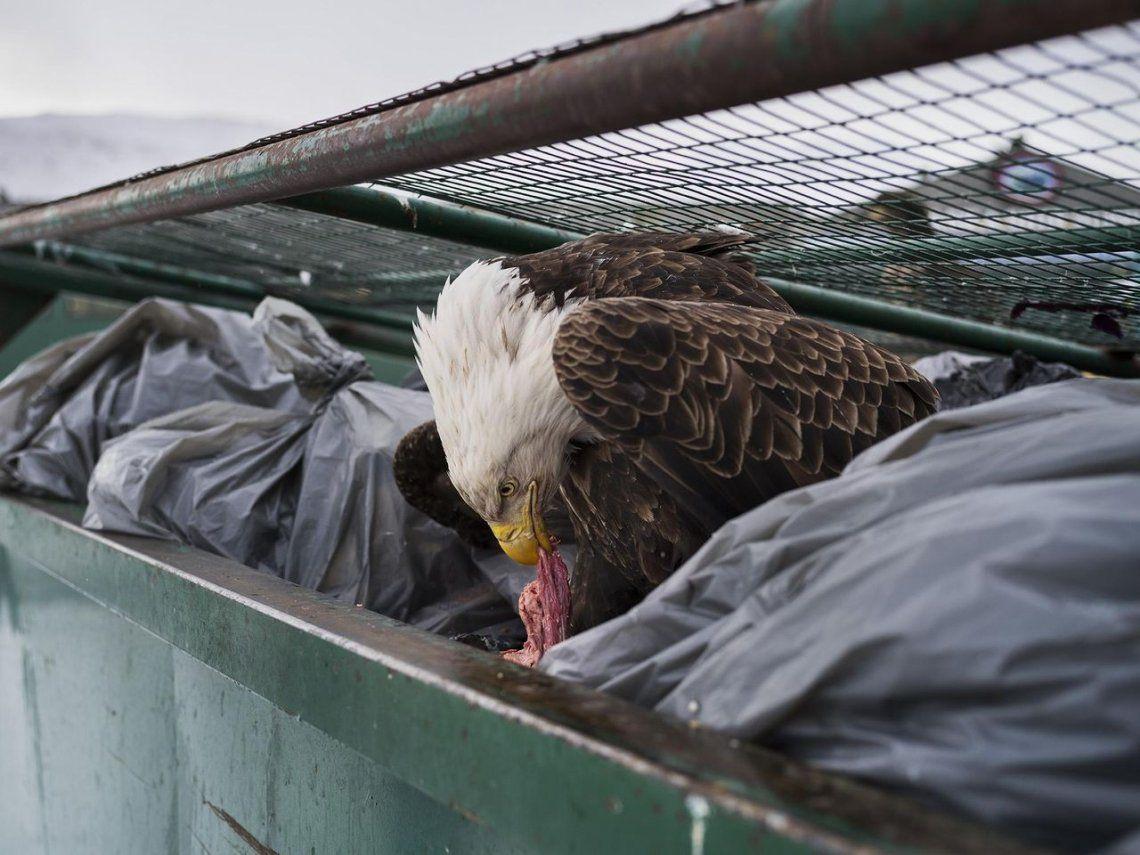 Dumpster Diver | Naturaleza