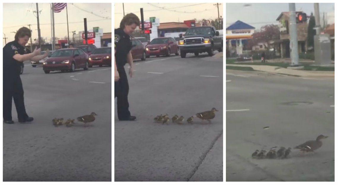 Familia de patos y una policía, los protagonistas del video viral de la semana