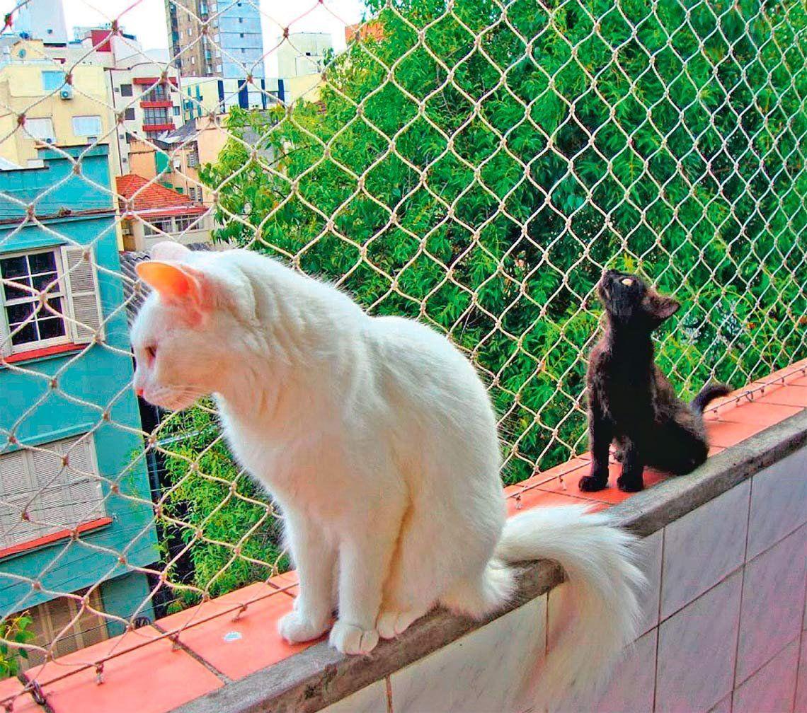 Medidas de seguridad efectivas para los gatos