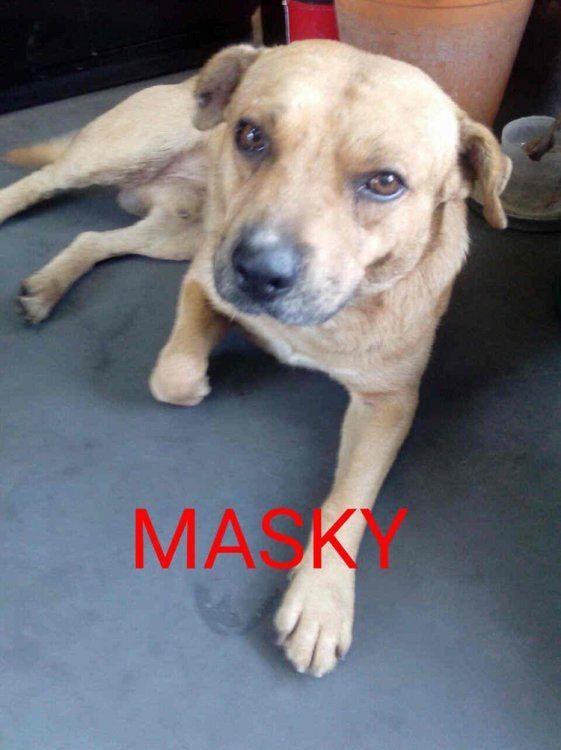 Un año extrañando a Masky