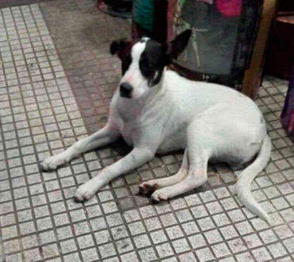 Gregorio, un cachorro muy bueno que necesita de vos