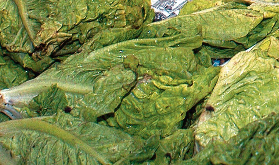 dLa lechuga alcanzó esta semana un precio promedio record de $ 90 el kilo en las verdulerías.