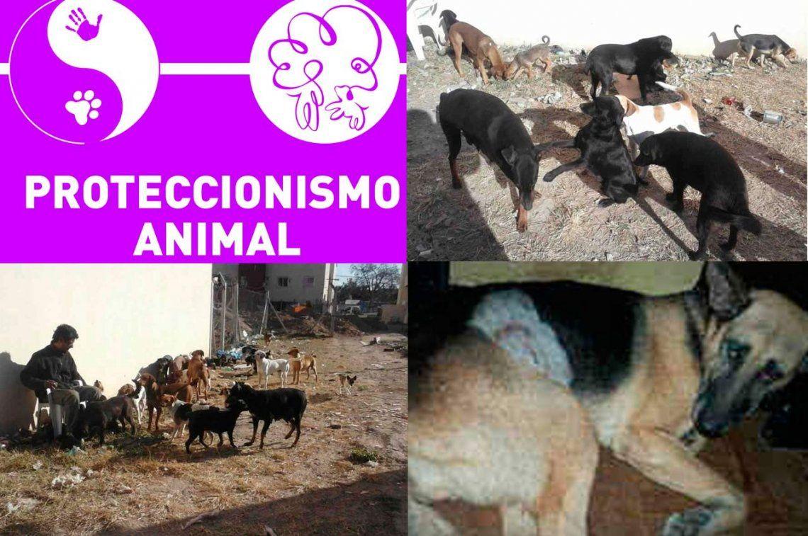 Proteccionismo animal: 10 años cuidando a las mascotas