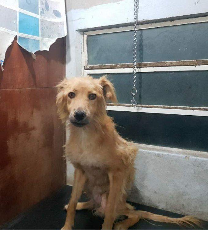 Guille, un perrito muy sufrido que merece los mejor
