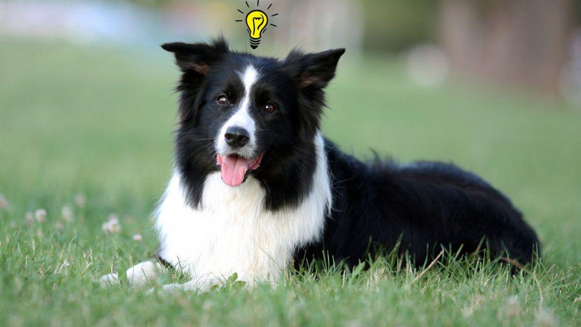 Atención Balcarce: conocé la lista de los perros más inteligentes