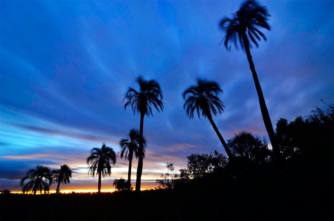El Palmar, una maravilla natural en tierras entrerrianas