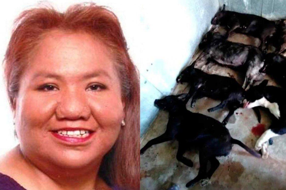 Estados Unidos: una mujer murió atacada por una jauría de perros salchichas