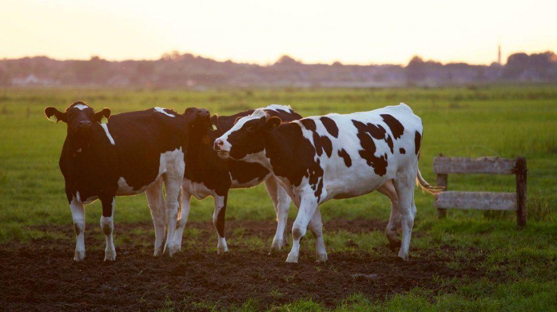 Aumentó 65% la exportación de carne vacuna en un año