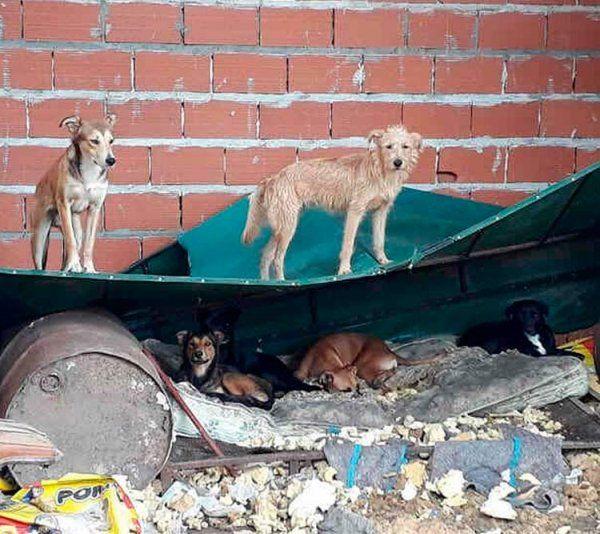 Perros que corren riesgos y necesitan ayuda