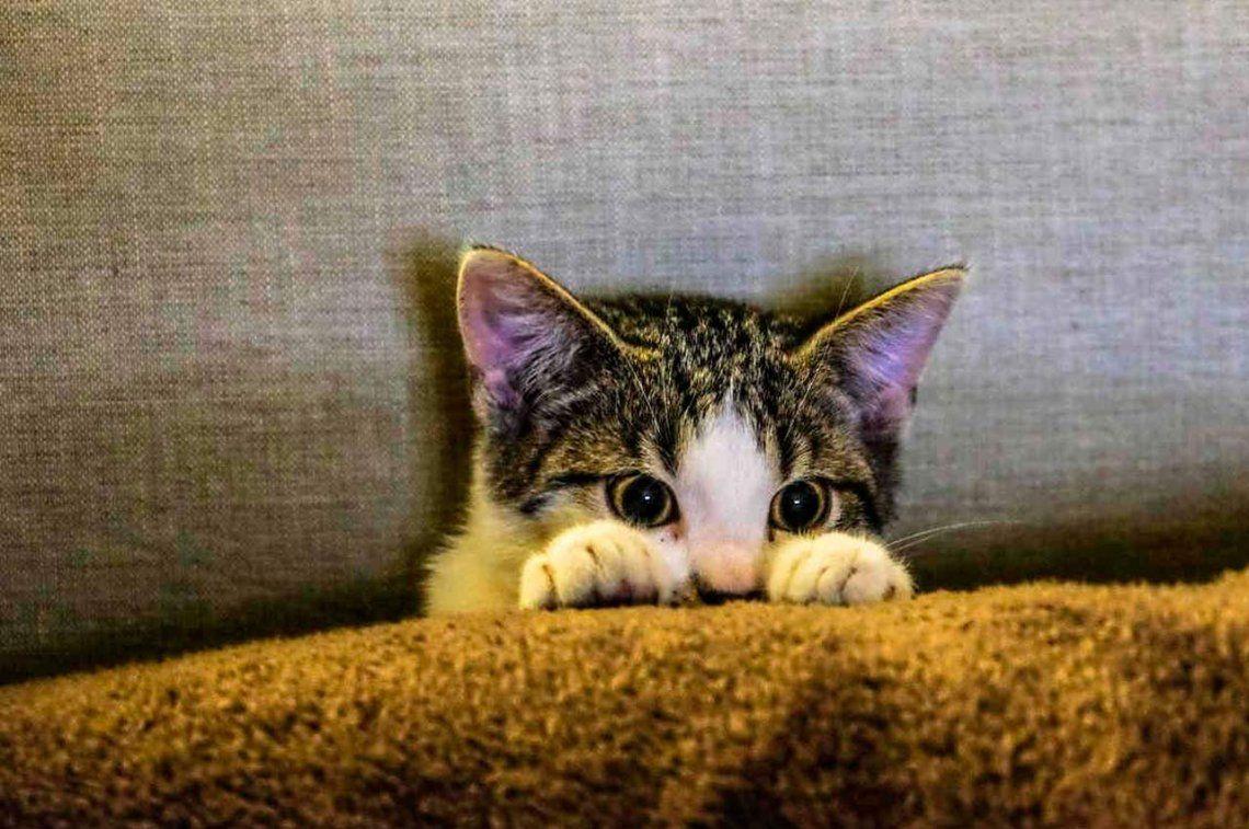 Gatos bien escondidos