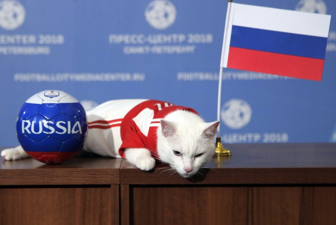 Aquiles el Gato, el pronosticador oficial de Rusia 2018