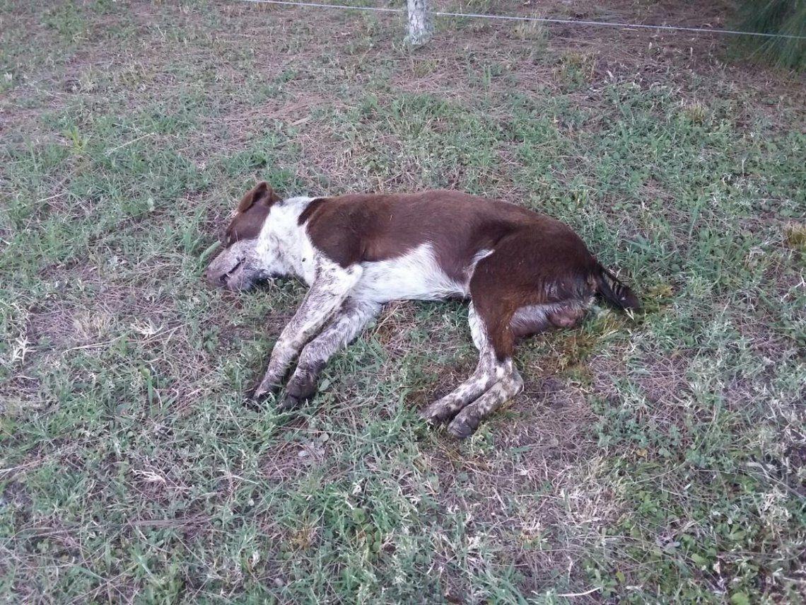 Envenenan perros para robar en casas en Florencio Varela