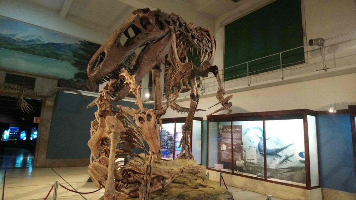 Presentaron esqueleto de dinosaurio patagónico y réplica de tiburón gigante