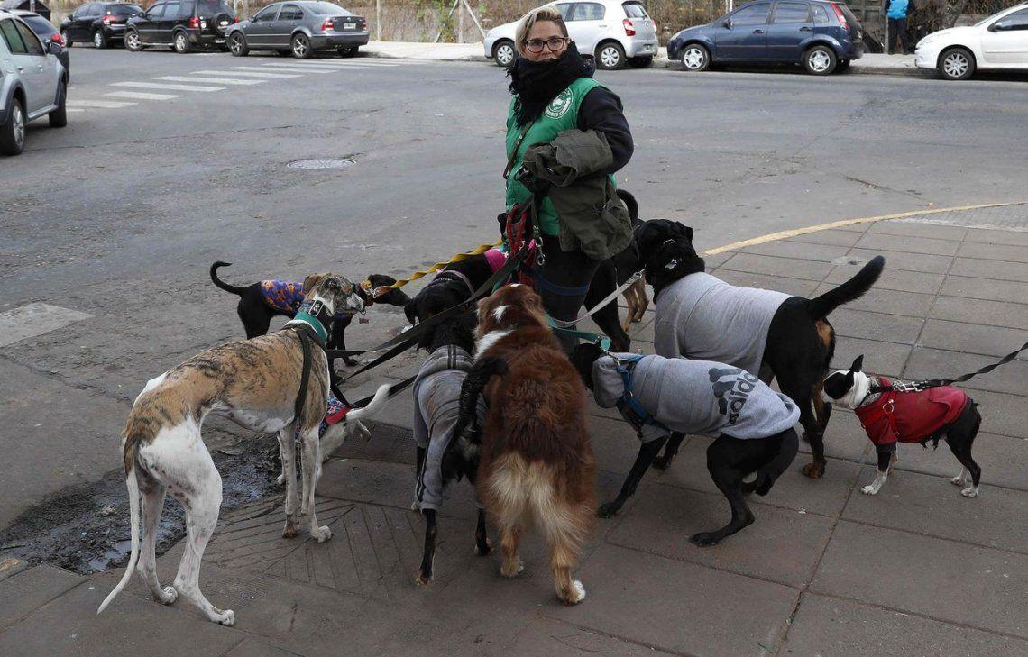 Paseadores de perros quieren su marco legal