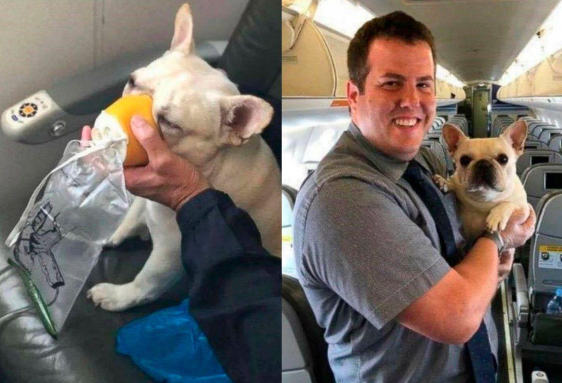Una perra debió ser asistida con oxígeno en pleno vuelo para sobrevivir