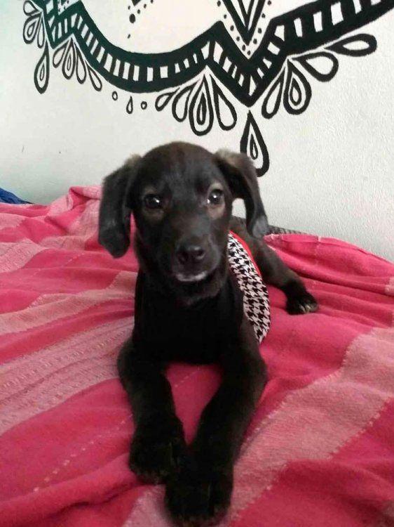 Natividad, dulce cachorrita en adopción