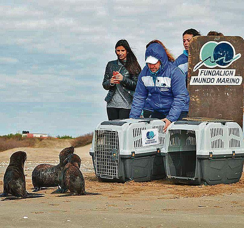 dLos lobos fueron reintroducidos en las playas de San Clemente.