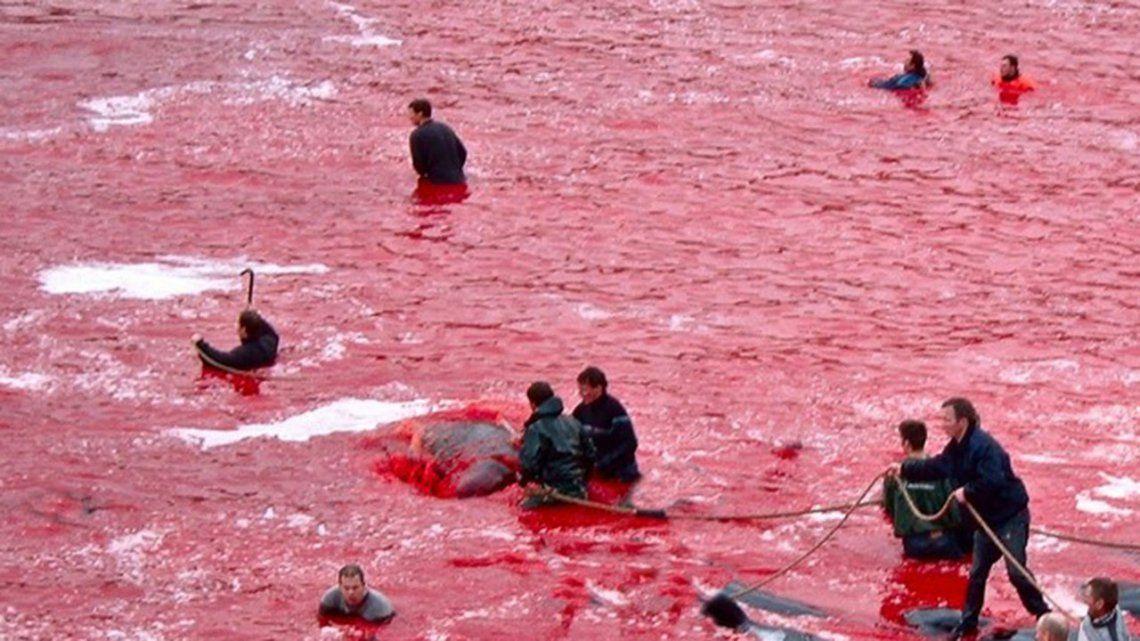 Conocé el ancestral y maquiavélico ritual por el que el agua de esta isla se tiñe de rojo