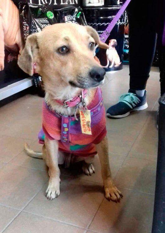 Mili, una cachorrita que quiere un hogar