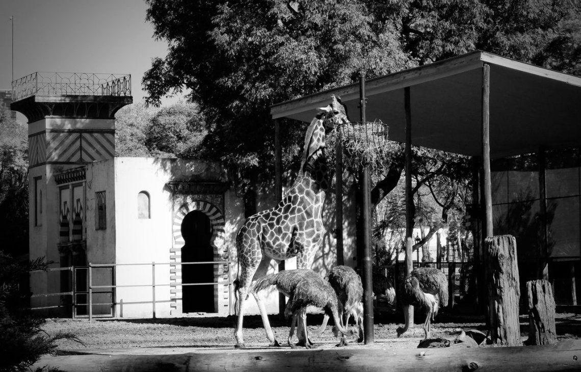 Así está el Ecoparque hoy: 35 fotos para entender la realidad de los animales