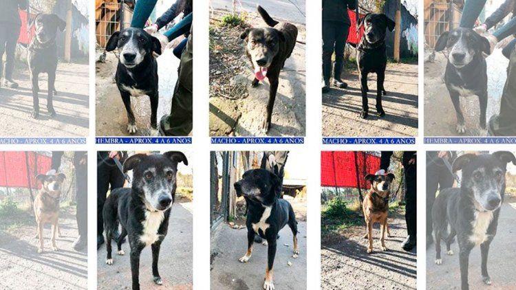 Desesperado pedido de un refugio para que adopten seis perros