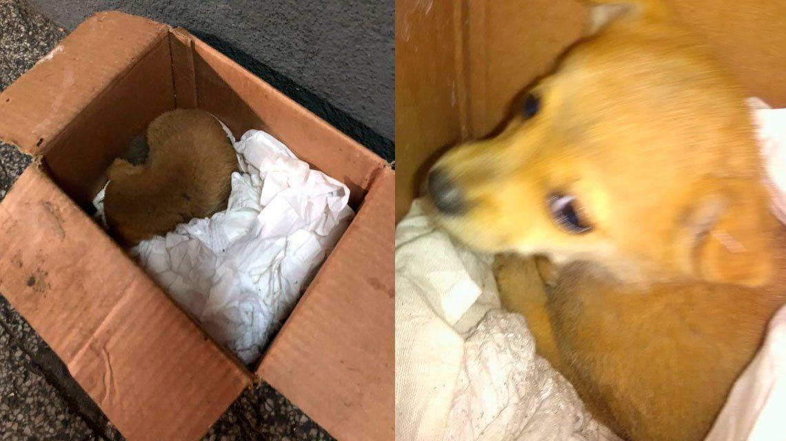 VIDEO | Un hombre encontró a un perrito que fue arrojado a un camión de basura