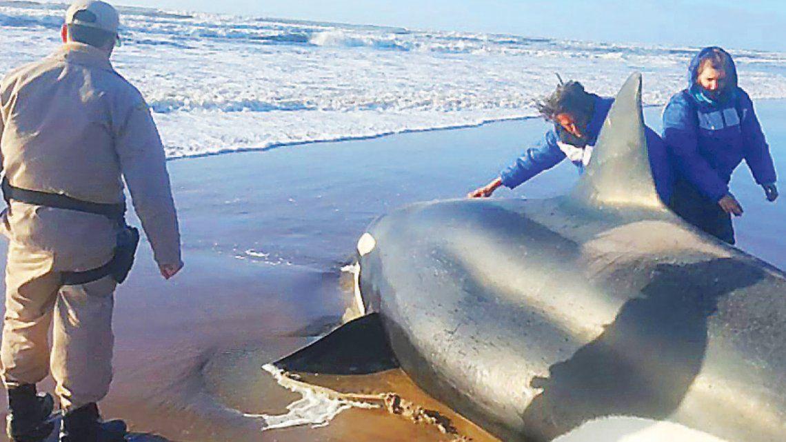 Mar del Plata: logran liberar una orca y una ballena
