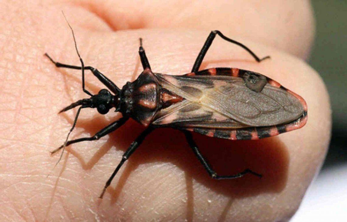 El Chagas afecta al 4 por ciento de los argentinos