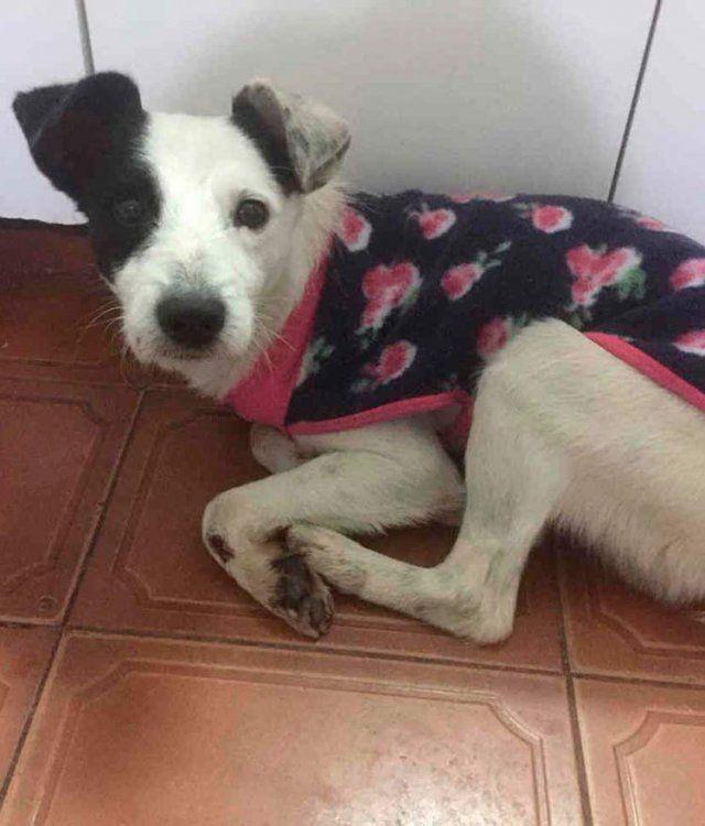 Coco, un perro menudito y cariñoso