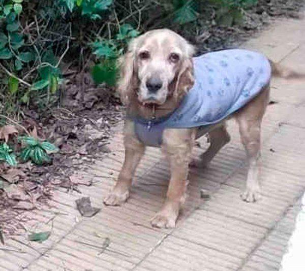 Rubia ya está recuperada y busca familia