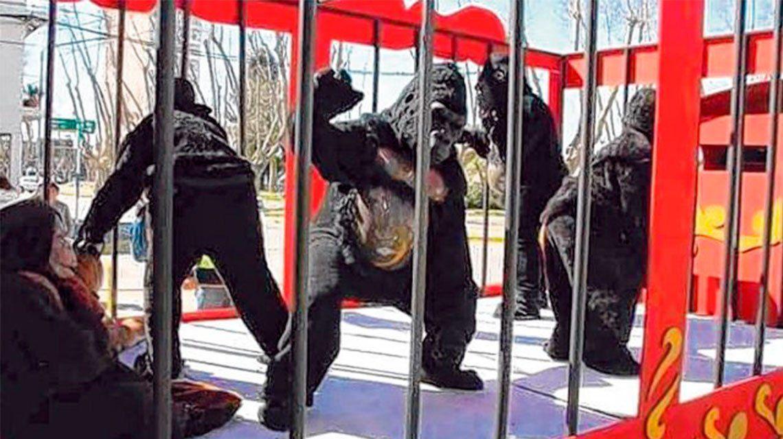 Insólito: denunció a un circo por maltrato animal... pero eran personas disfrazadas
