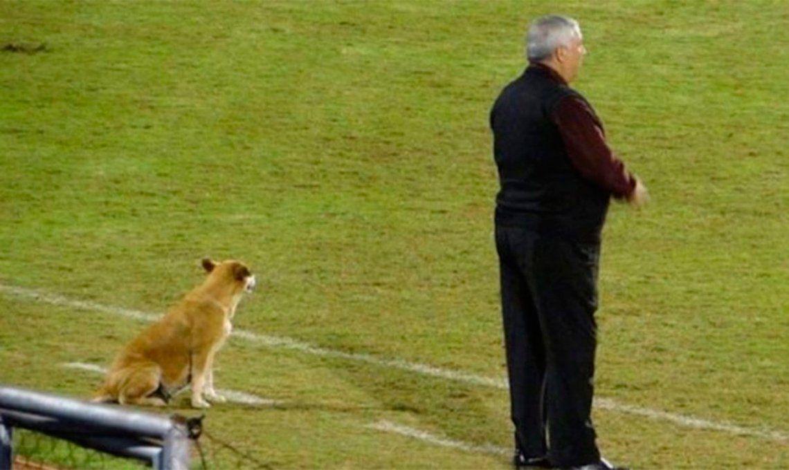 Insólito: una perra es ayudante de un DT de fútbol