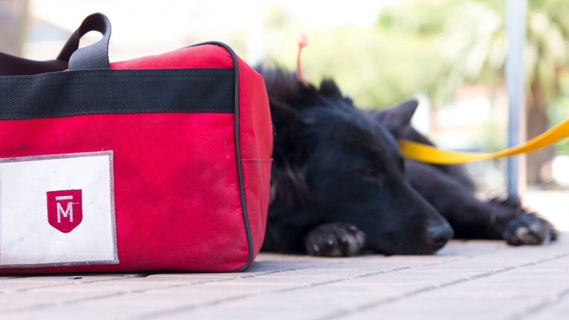 Quirófano móvil para mascotas en Castelar